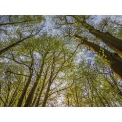 Fotomural Canopy 4-552